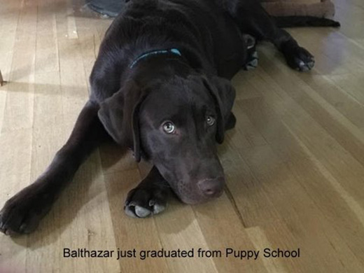 Balthazar just graduated from Puppy School