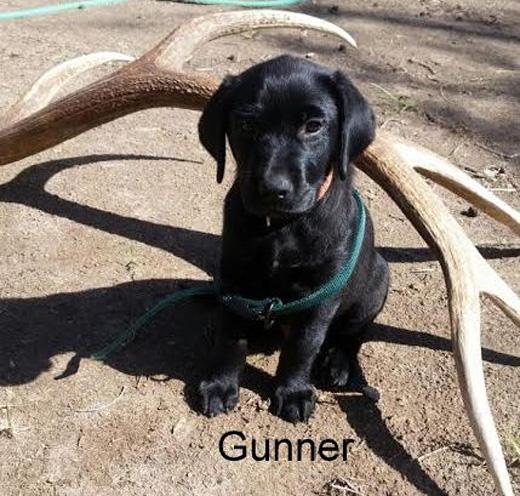 Gunner_