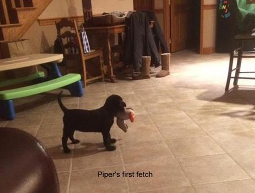 Piper's first fetch