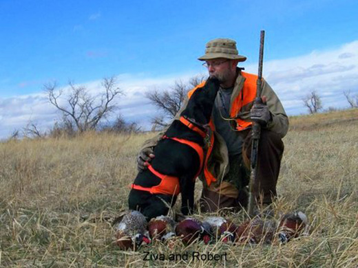 Ziva's pheasant hunt #1