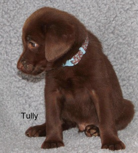 tully2