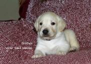 Puppy 24