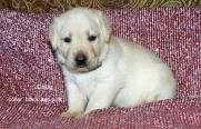 Puppy 30