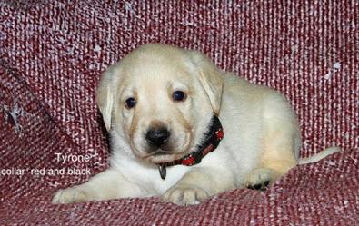 Puppy 38