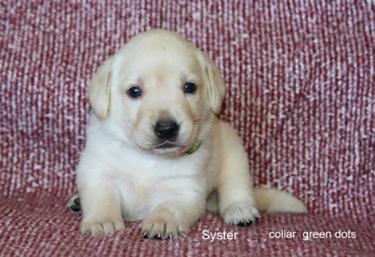 Puppy 78