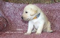 Puppy 85