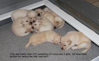 Puppy group