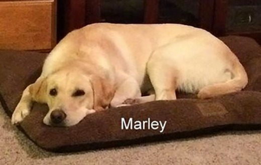 Marley is 1 year old
