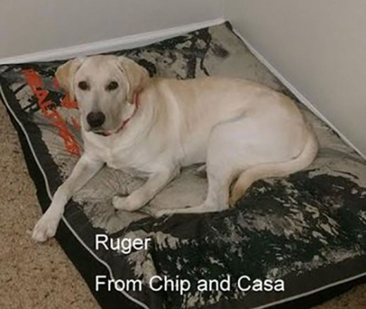 Ruger aka Izzy, is from Chip and Casa