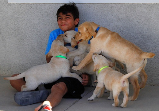 Kid with pups